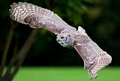National Centre for Birds of Prey at Duncombe Park, Helmsley