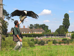 Falconry uk birds of prey centre thirsk