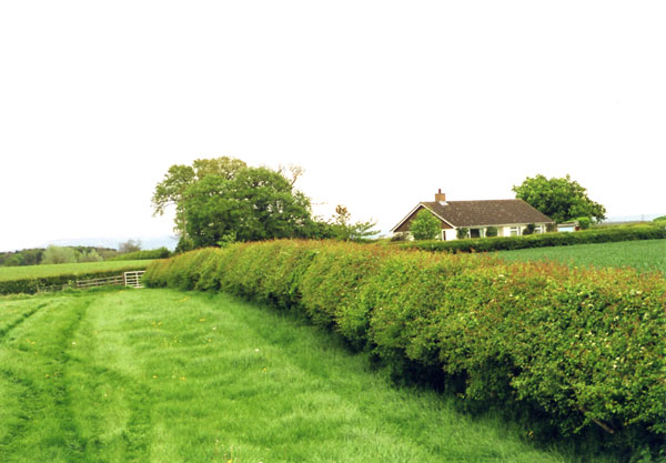 Stanhow farm historic hedgerows