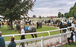 Thirsk horse racing parade ring