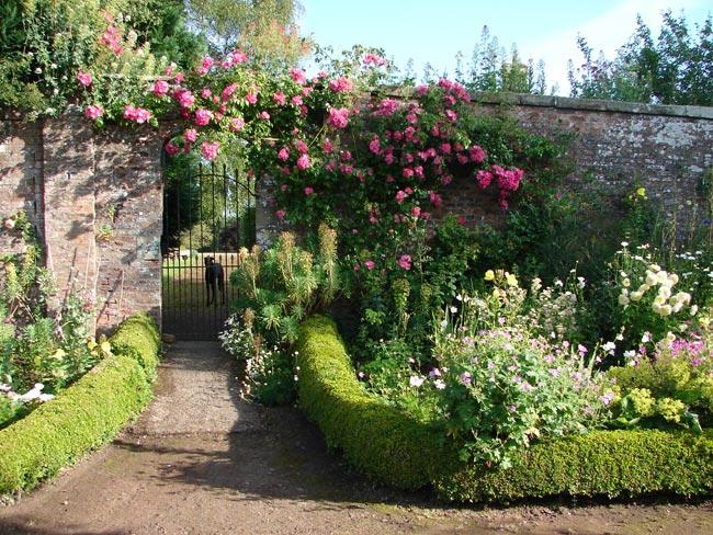 Ingleby manor flowers